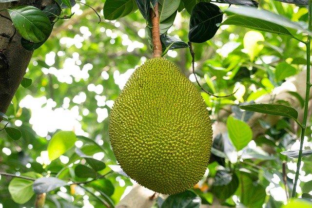 Yaca Fruta
