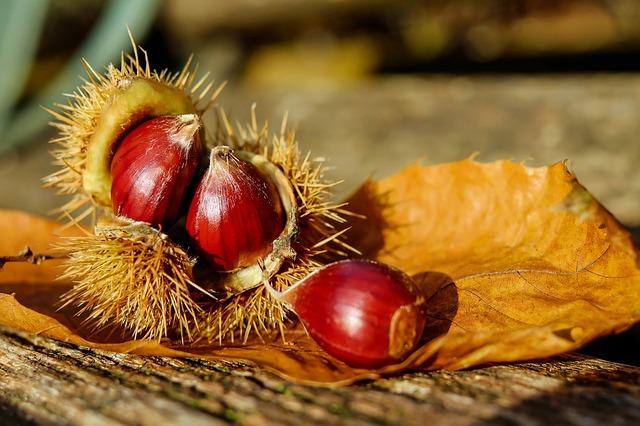 Fruta Castaña
