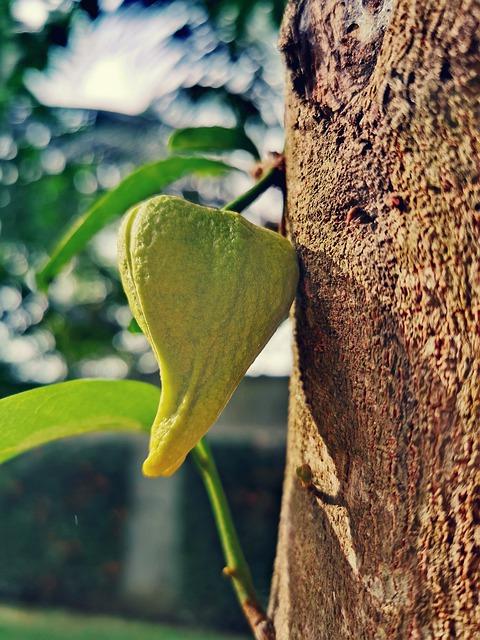 Guanábana Flor
